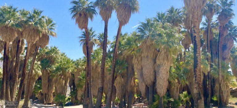 Seven Sisters Falls – Palm Springs Desert Oasis